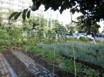H280819いやし収穫体験 (3)