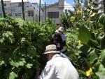 H280819いやし収穫体験 (12)