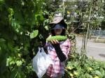 H280819いやし収穫体験 (15)