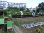 H280807農園育成管理 (19)