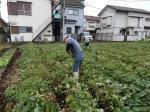 H281031癒しの郷野島農園育成管理 (1)