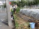 H281031癒しの郷野島農園育成管理 (10)