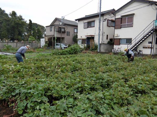 H281031癒しの郷野島農園育成管理 (2)