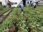 H281031癒しの郷野島農園育成管理 (3)