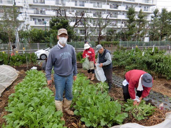 H281031癒しの郷野島農園育成管理 (5)