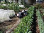 H281031癒しの郷野島農園育成管理 (8)
