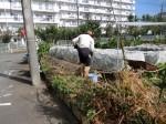 H281031癒しの郷野島農園育成管理 (9)