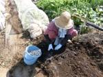 H281107農園育成管理 (1)