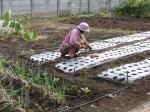 H281107農園育成管理 (10)