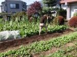 H281107農園育成管理 (11)