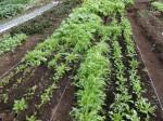 H281107農園育成管理 (25)
