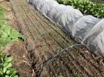 H281107農園育成管理 (6)