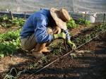 H281107農園育成管理 (19)
