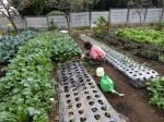 H281107農園育成管理 (22)