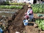 H281107農園育成管理 (8)