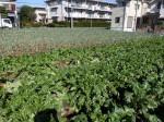H281112農園育成管理 (12)