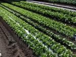 H281112農園育成管理 (16)