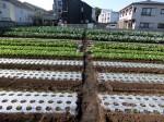 H281112農園育成管理 (15)