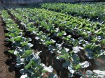 H281112農園育成管理 (18)