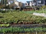 H281112農園育成管理 (2)
