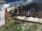 H281217いやし収穫体験サツマイモ掘り (1)