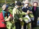 H281217いやし収穫体験サツマイモ掘り (22)