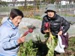 H281217いやし収穫体験サツマイモ掘り (27)