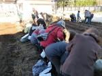 H281217いやし収穫体験サツマイモ掘り (44)