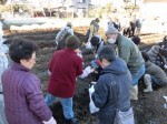 H281217いやし収穫体験サツマイモ掘り (5)