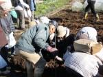H281217いやし収穫体験サツマイモ掘り (6)