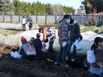 H281217いやし収穫体験サツマイモ掘り (8)