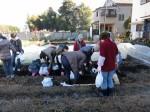 H281217いやし収穫体験サツマイモ掘り (9)