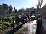 H281217親子農業体験サツマイモ掘り・いやし収穫体験 (12)