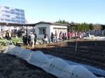 H281217親子農業体験サツマイモ掘り・いやし収穫体験 (14)