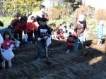 H281217親子農業体験サツマイモ掘り・いやし収穫体験 (19)