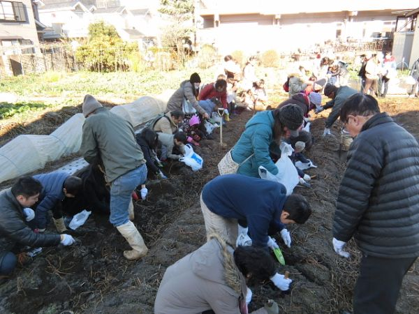 H281217親子農業体験サツマイモ掘り・いやし収穫体験 (20)