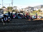 H281217親子農業体験サツマイモ掘り・いやし収穫体験 (38)