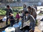 H281217親子農業体験サツマイモ掘り・いやし収穫体験 (80)