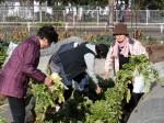 H281217いやし収穫体験サツマイモ掘り (25)
