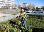 H281217いやし収穫体験サツマイモ掘り (30)