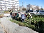 H281217いやし収穫体験サツマイモ掘り (35)