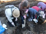 H281217いやし収穫体験サツマイモ掘り (40)
