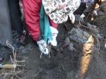 H281217いやし収穫体験サツマイモ掘り (42)
