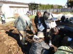 H281217いやし収穫体験サツマイモ掘り (43)