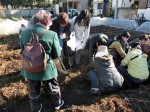 H281217いやし収穫体験サツマイモ掘り (45)