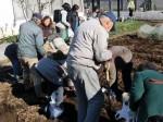 H281217いやし収穫体験サツマイモ掘り (7)