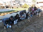 H281217親子農業体験サツマイモ掘り・いやし収穫体験 (16)