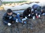 H281217親子農業体験サツマイモ掘り・いやし収穫体験 (17)
