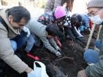 H281217親子農業体験サツマイモ掘り・いやし収穫体験 (22)