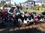 H281217親子農業体験サツマイモ掘り・いやし収穫体験 (24)